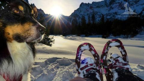 … und wenn der Schnee staubt: Winter-Wanderungen und Schneeschuhtouren mit Hund