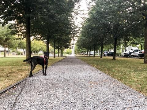 Smartie und die Fahrradfahrer – 5 Tipps wie ihr mit eurem Hund sicher auf frequentierten Wegen Gassi geht