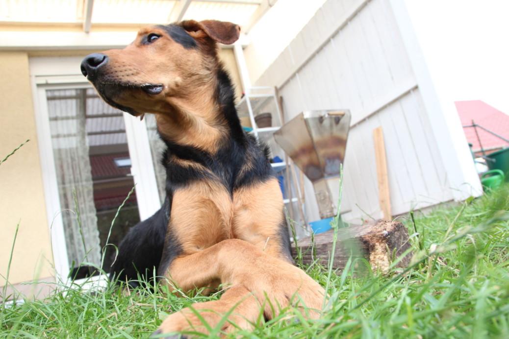 Leben auf dem Land mit Hund
