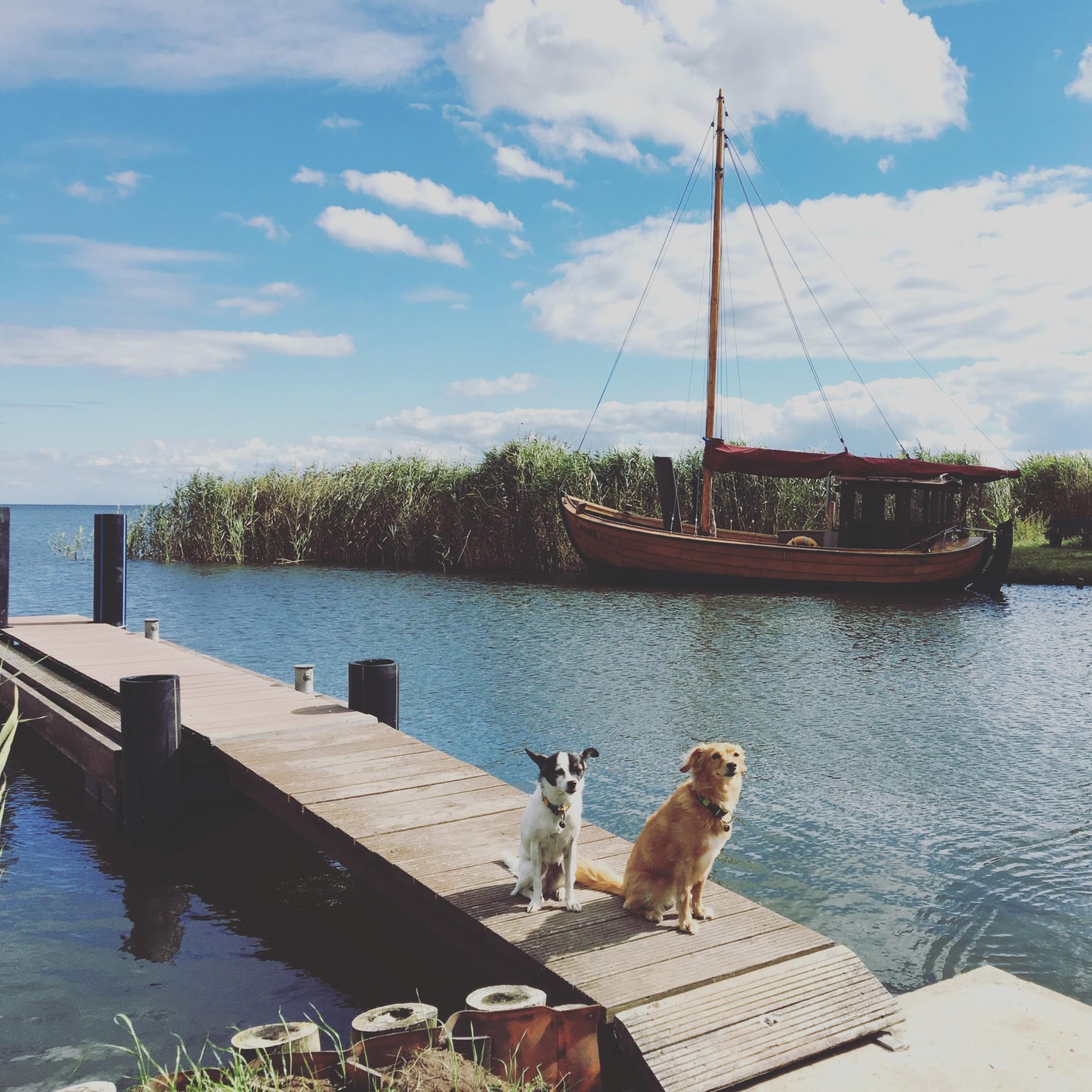 Usedom mit Hund Tipps