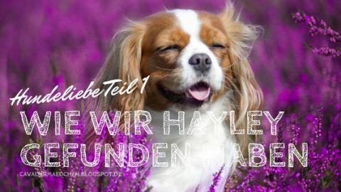 [midoggy Parade] – Hundeliebe Teil 1 – wie wir Hayley gefunden haben
