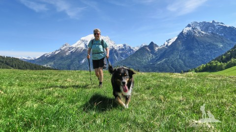 Eure Lieblings-Blogposts: Die Top 5 Artikel auf Mein Wanderhund – 2017