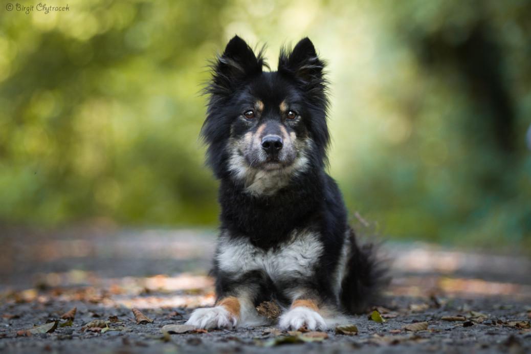 Trauer verarbeiten Hund