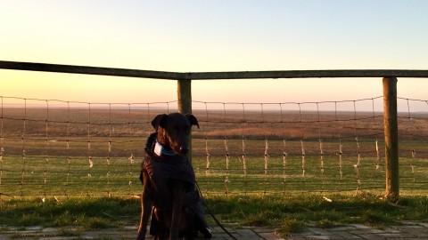 Hundeurlaub in Dornum an der Nordsee