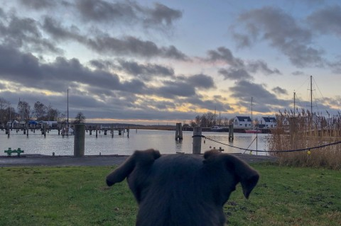 Hundeurlaub an der Ostsee in Peenemünde