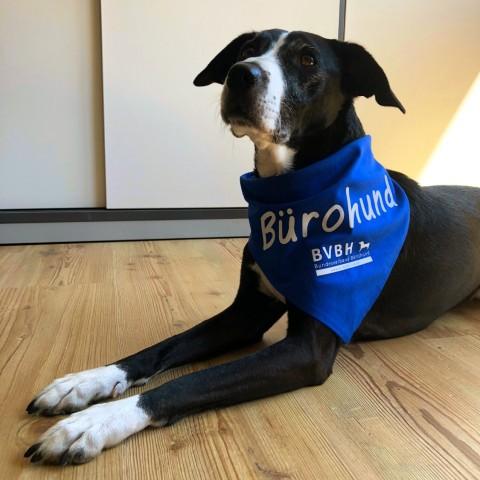Internationaler Bürohundtag
