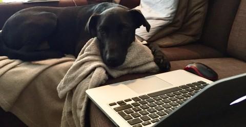 Der Hund als Kollege – welche Regeln sind für Bürohunde wichtig?