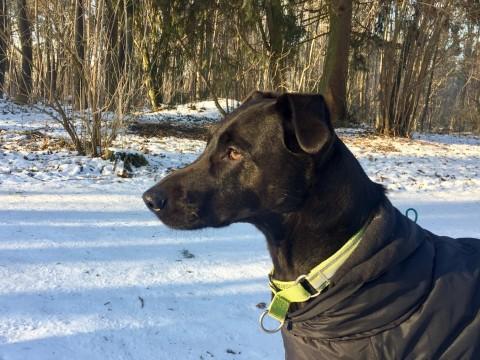 Hilfe! Braucht mein Hund einen Wintermantel?