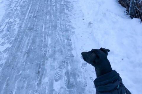 Stadthund im Winter – 5 Tipps um sicher durch die kalte Jahreszeit zu kommen
