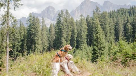Karersee & Bärenbadalm [Südtirol erleben]