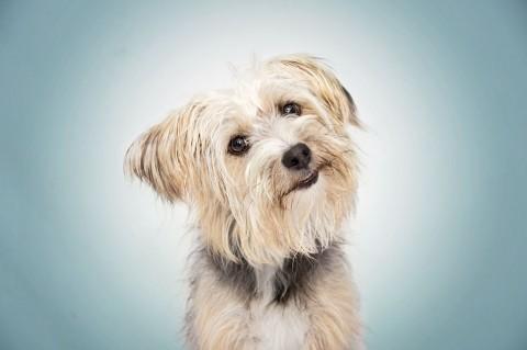 3 Tipps um einen guten Hundefotografen zu finden