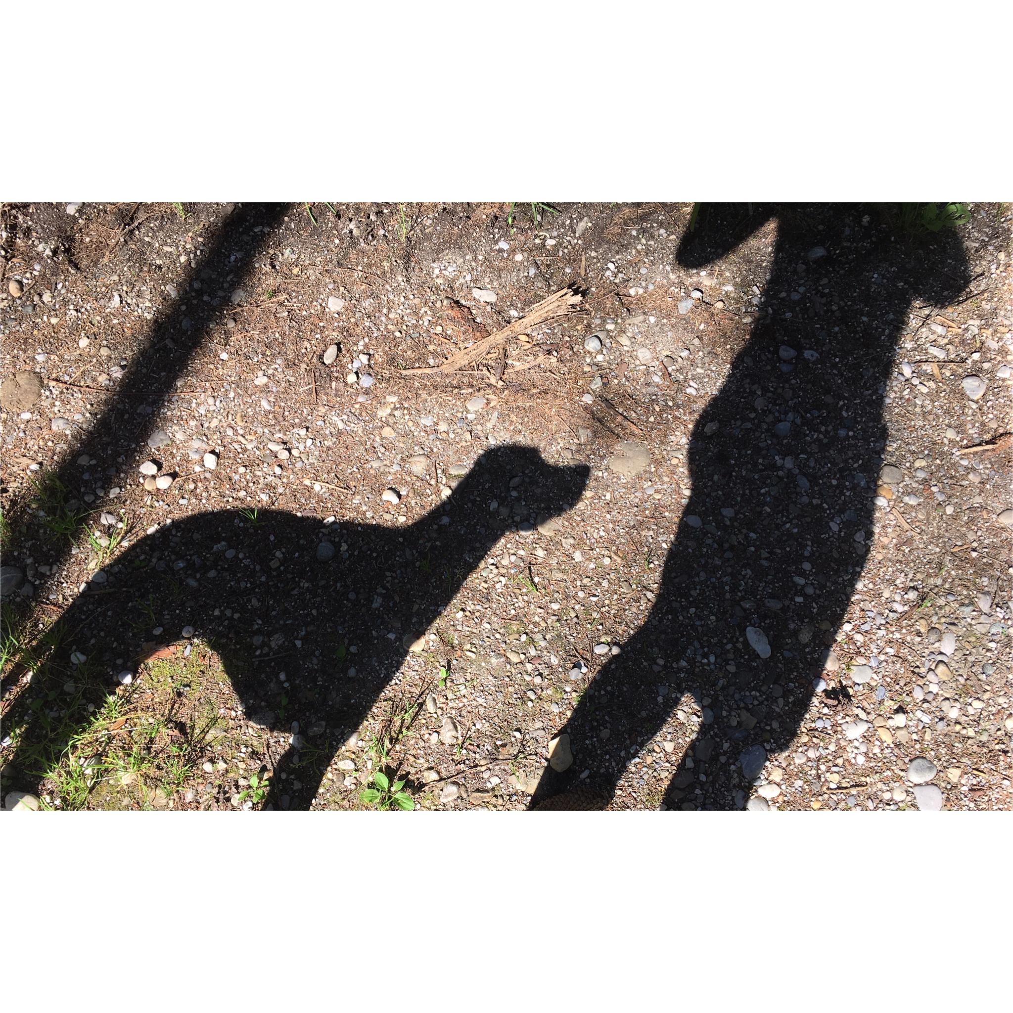 Sommer in München mit Hund