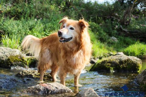 Wenn es kratzt und juckt – Die Futtermittelallergie beim Hund