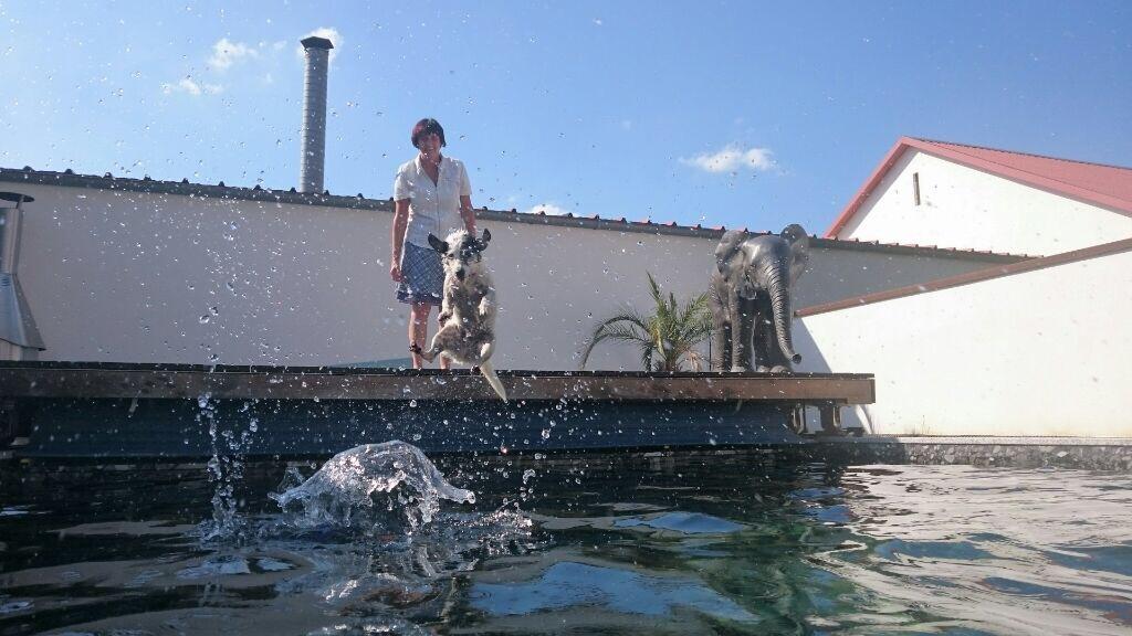 Wasserspaß mit Hund