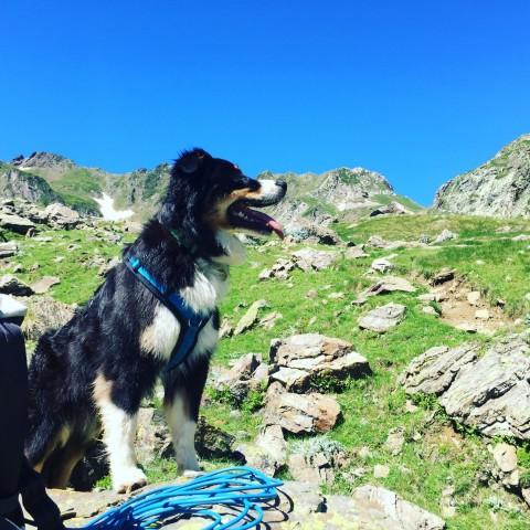 Just doing my Job – Über Hunde mit Wachinstinkt am Campingplatz
