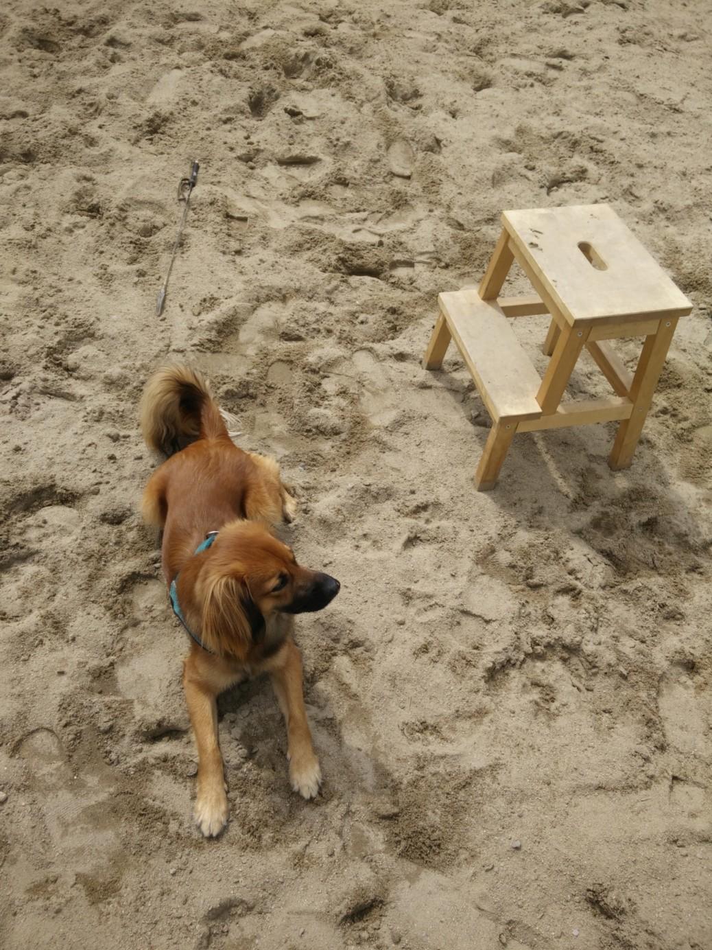 Zweckentfremdet für Hunde