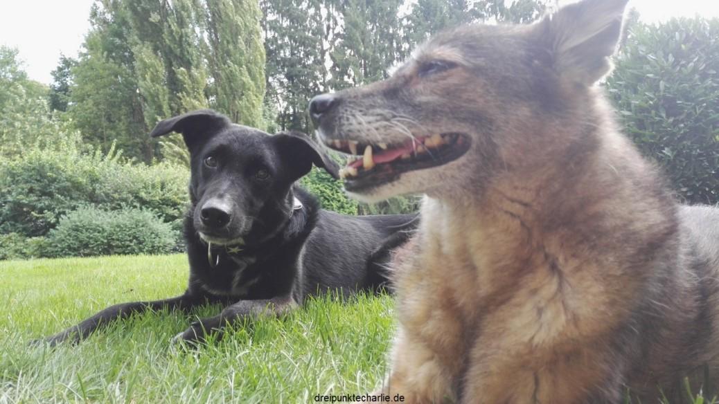 Was brauchen Hunde wirklich