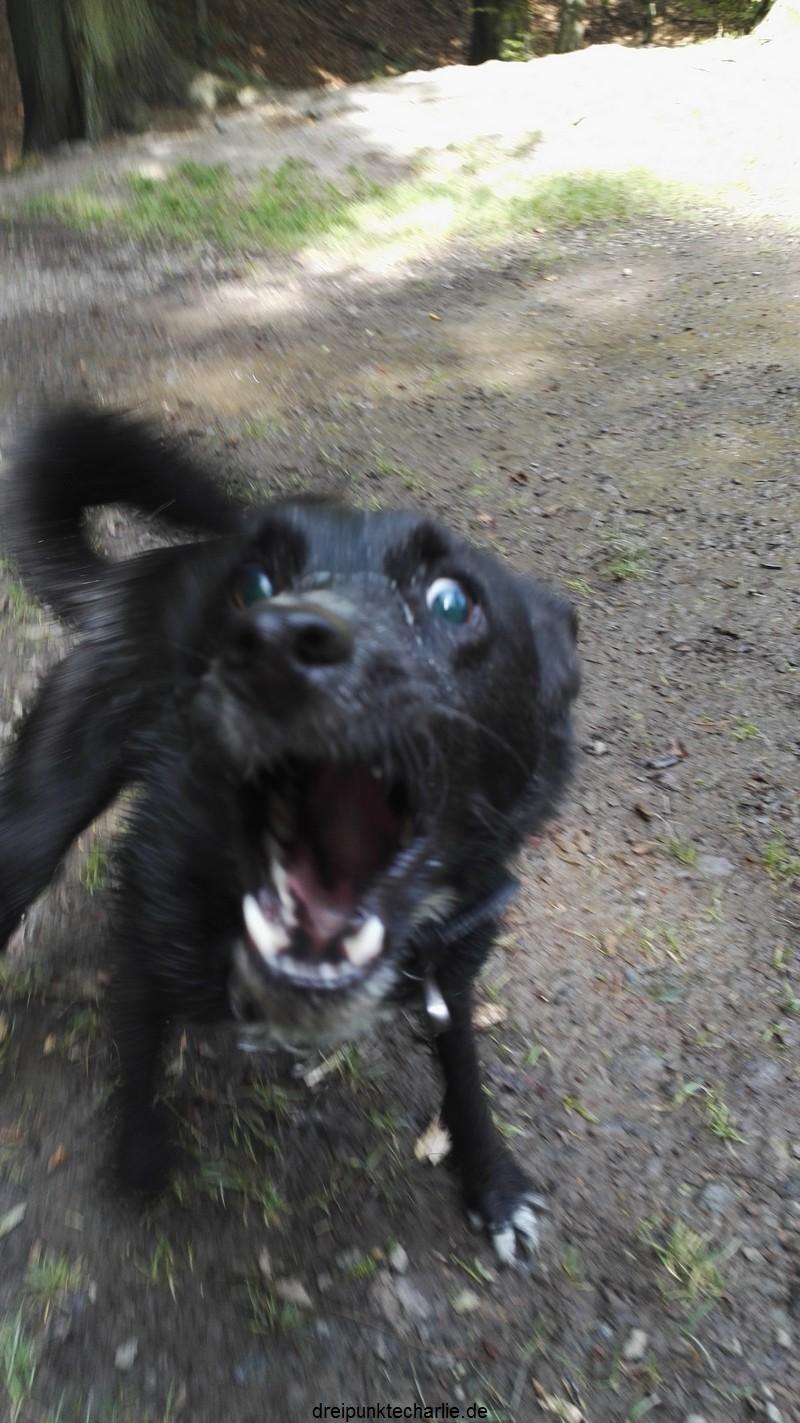 Verrückte fünf Minuten Hund