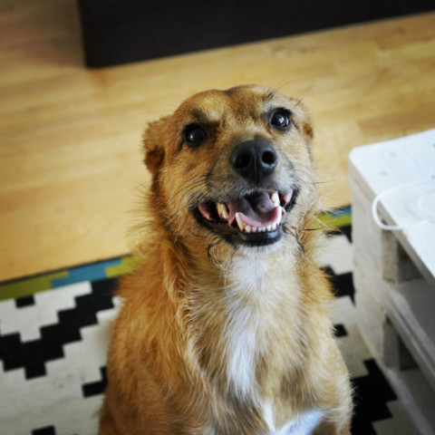 Mensch & Hund – 2 Welten prallen aufeinander