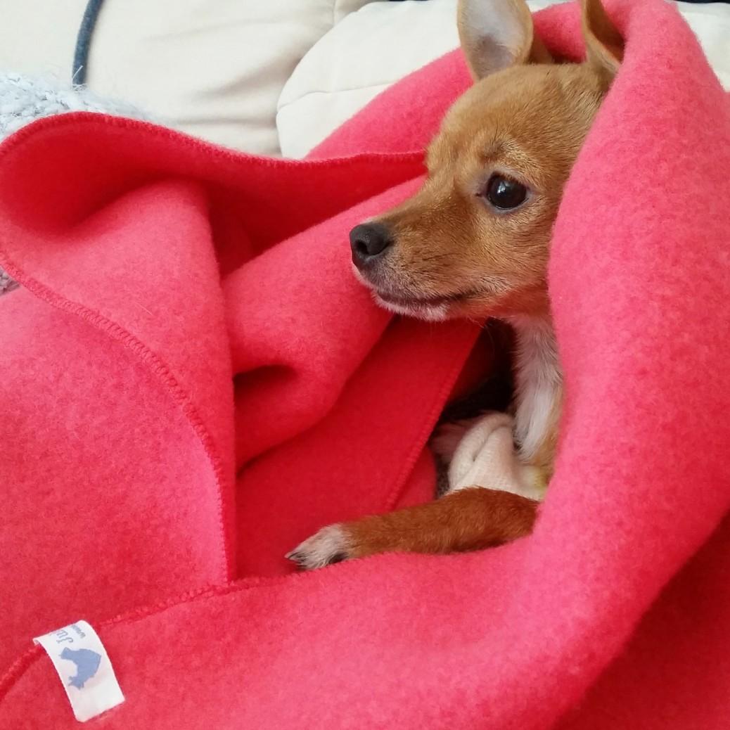 Kuscheldecke für Hunde in Bio Qualität