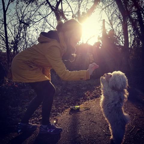 Wie ein Hund Dein Lebenverändert