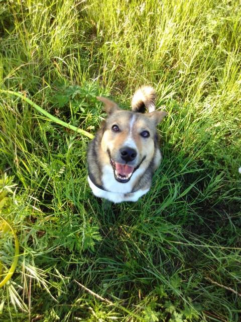 Korrekturen in der Hundeerziehung