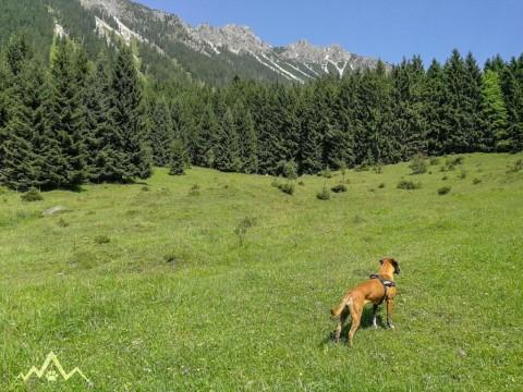 Wanderung mit dem Hund rund um Hinterstein bis zur Willersalpe