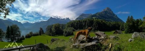 Panorama-Spaziergang mit dem Hund an Vierwaldstättersee und Seelisbergsee (Seeli) mit Stellplatz-Empfehlung