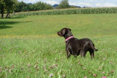 Hundeliebe – Sei vorsichtig mit deinen Wünschen, sie könnten wahr werden – oder High Drive Arbeitshund gesucht