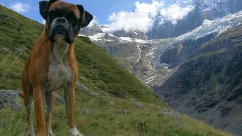 Wanderung mit dem Hund von Grindelwald zur Bäregghütte mit Gletscherpanorama