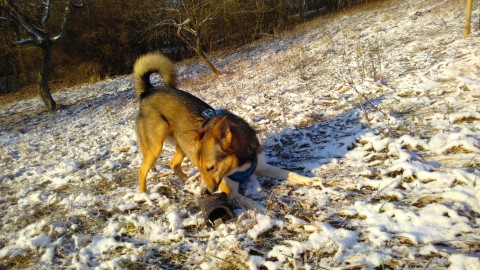 Ein Hund und der Sport