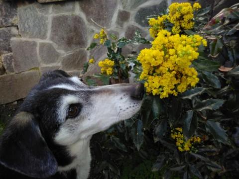 Von Chico, Listenrindern und dem Schutz menschlicher Tiere