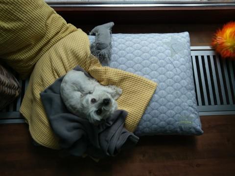 """""""Schlafende Hunde soll man nicht wecken…"""" [#WERBUNG, #ANZEIGE]"""