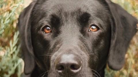 Effektive Mikroorganismen für Hunde