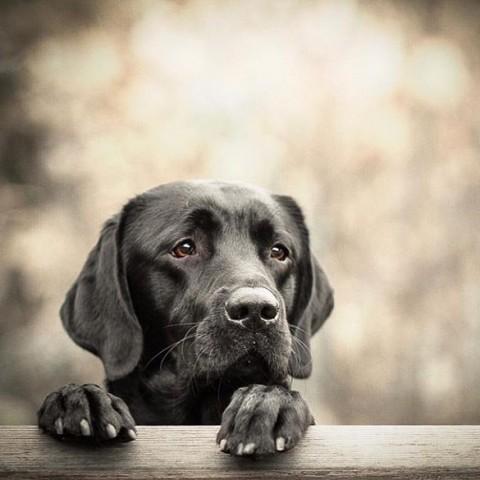 Gerstengras – Superfood für Hunde
