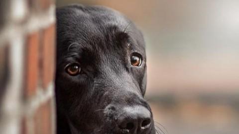 Honig und Propolis für Hunde