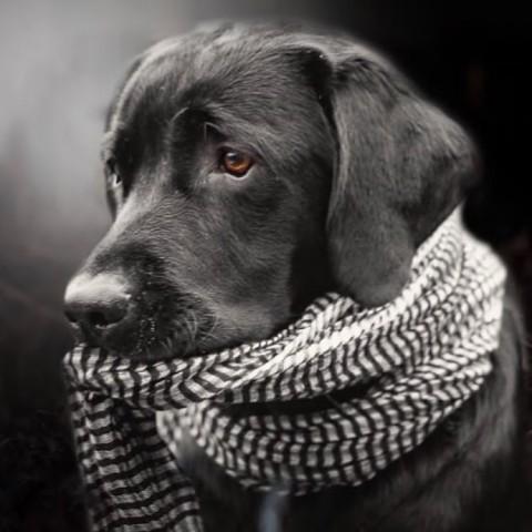 Wie oft und gegen was muss ich meinen Hund wirklich impfen lassen?