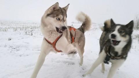 5 Gründe für Aggression bei Hunden