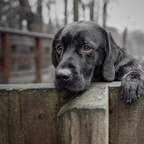 Wieviel Kalzium braucht der Hund?