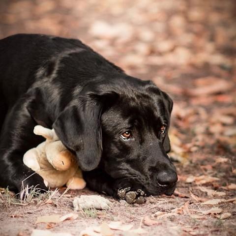 Den Hund im Fellwechsel unterstützen