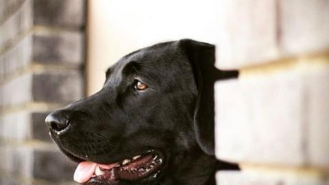 Wenn dem Hund die Ohren jucken