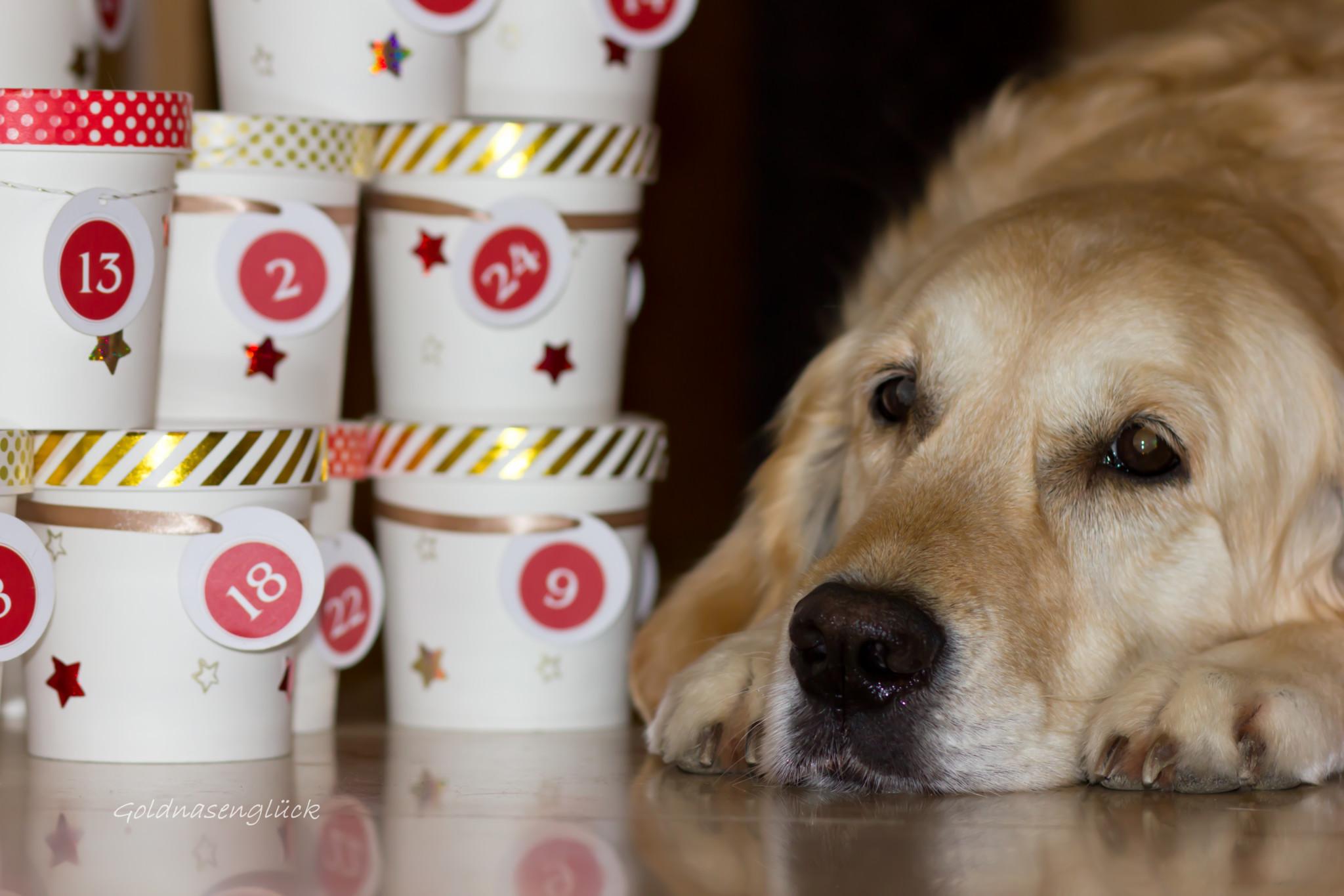Weihnachtskalender Hund.Diy Adventskalender Hund Midoggy Community