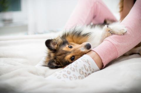 Hund und Beruf – ein unmögliches Ding?