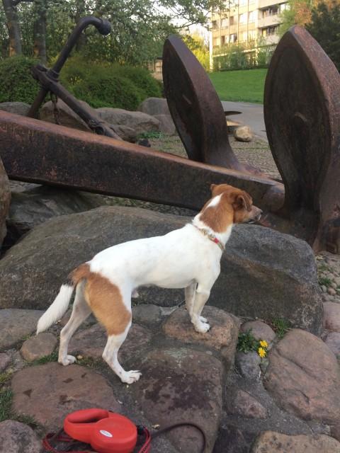 Hundefütterung – neuerdings eine Wissenschaft für sich
