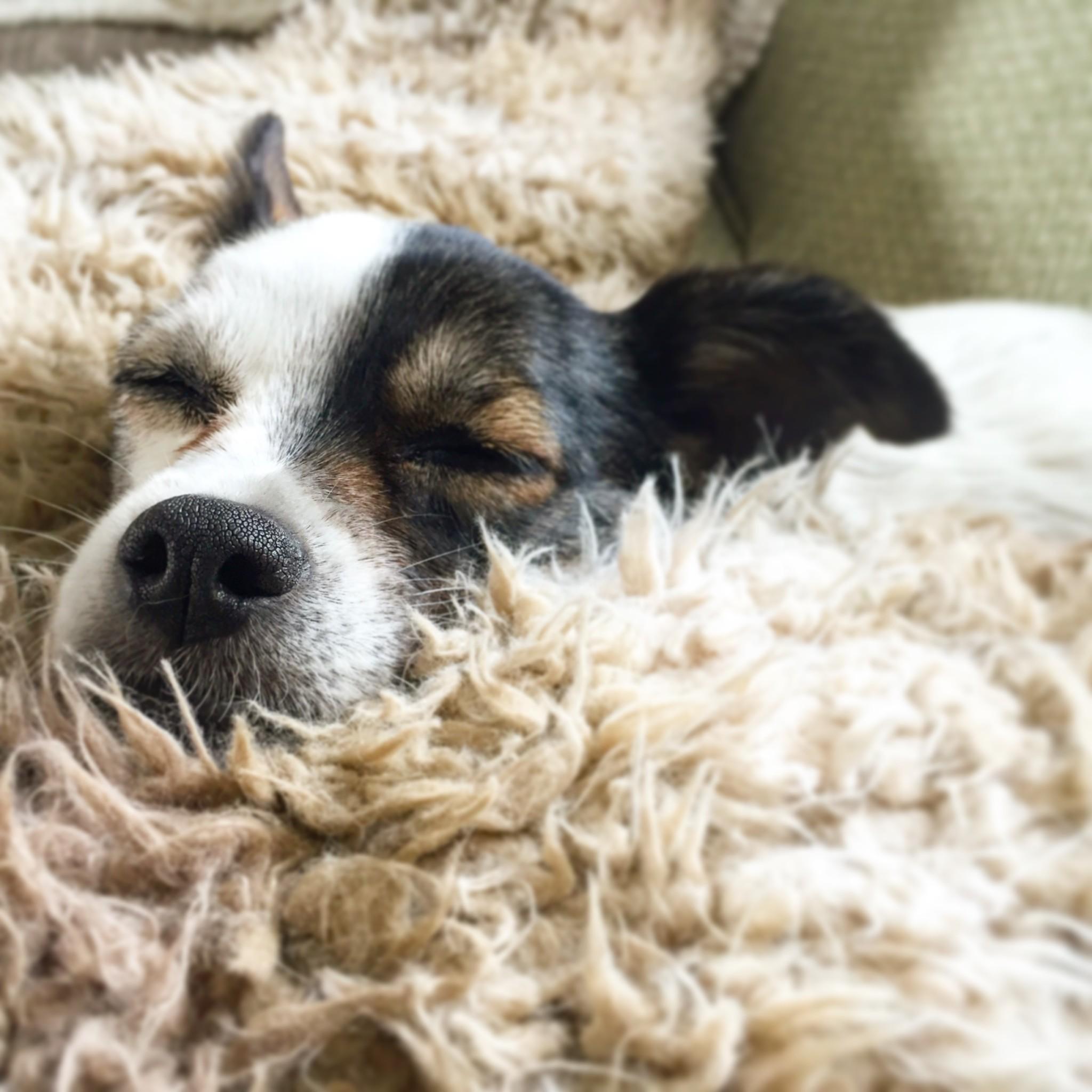 B12 Vitamin für Hunde