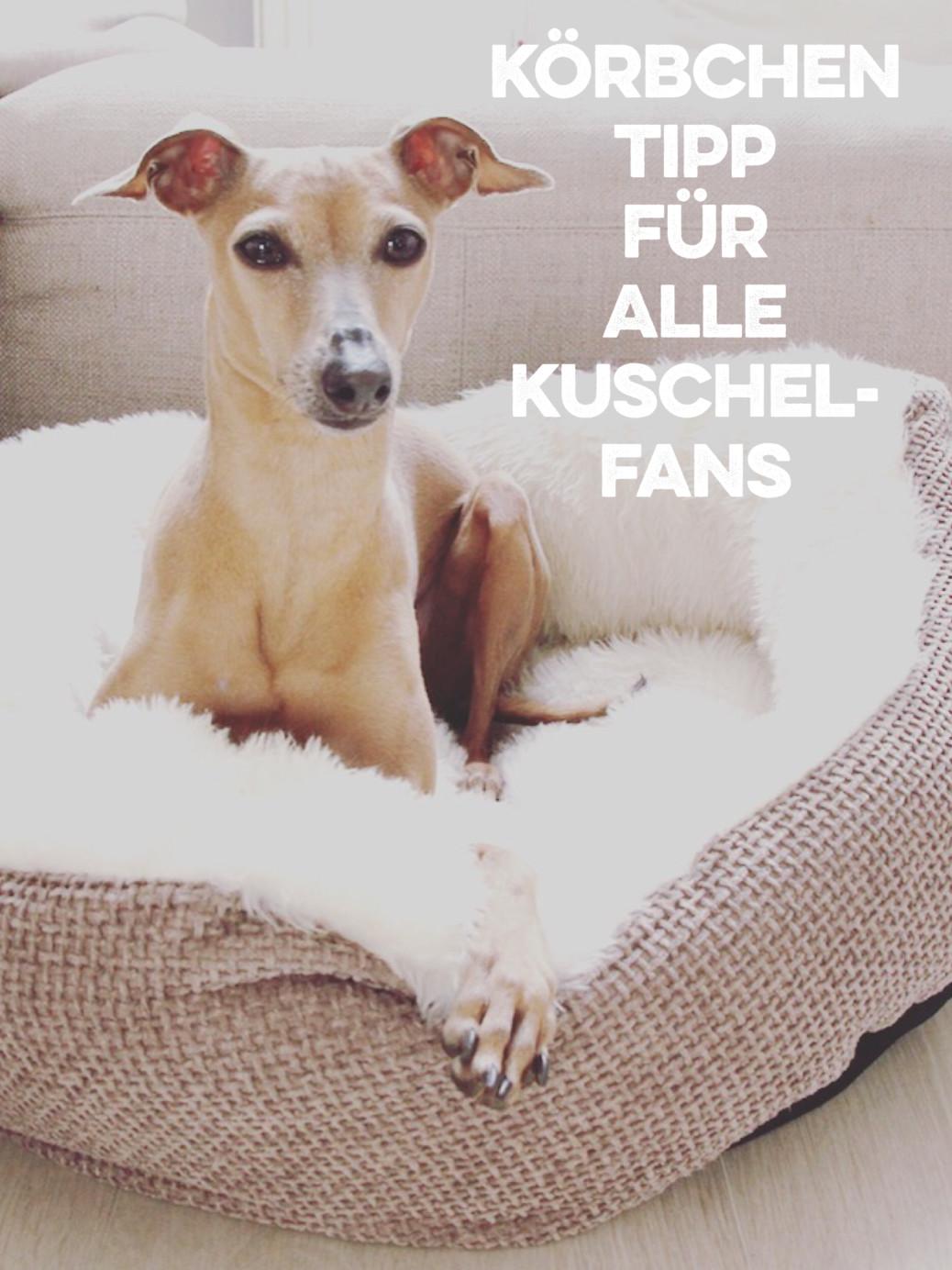 Kuschel Körbchen Tipp