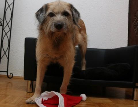 Hunde gehören nicht unter den Weihnachtsbaum