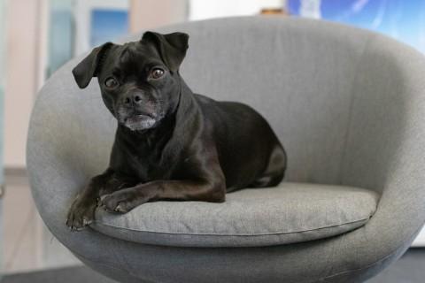 Hunde im Büro – Unsere Tipps & Tricks