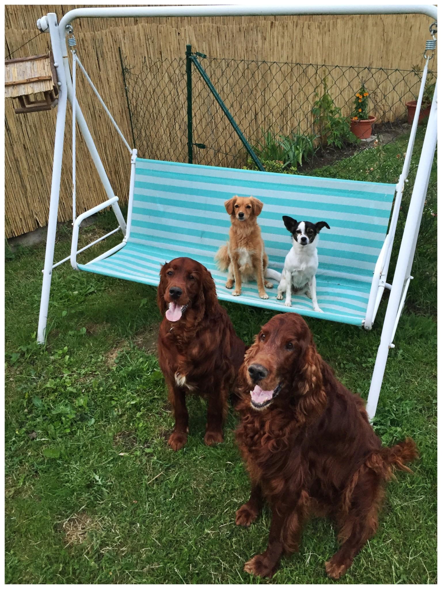 Besuch Hundeblogger