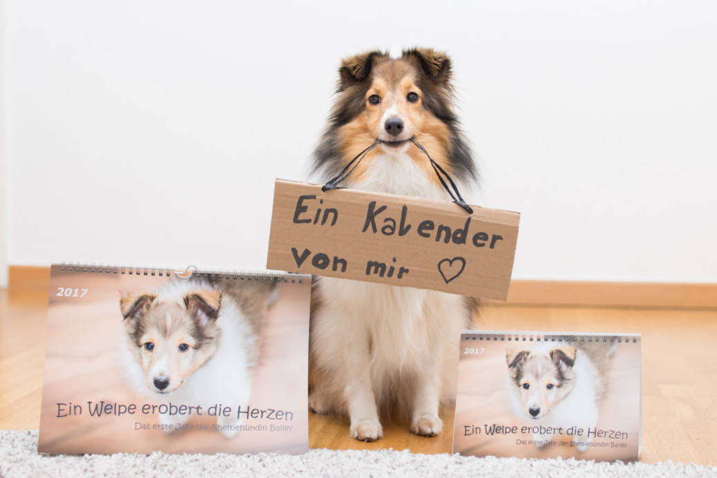 Kalender Sheltie Bailey